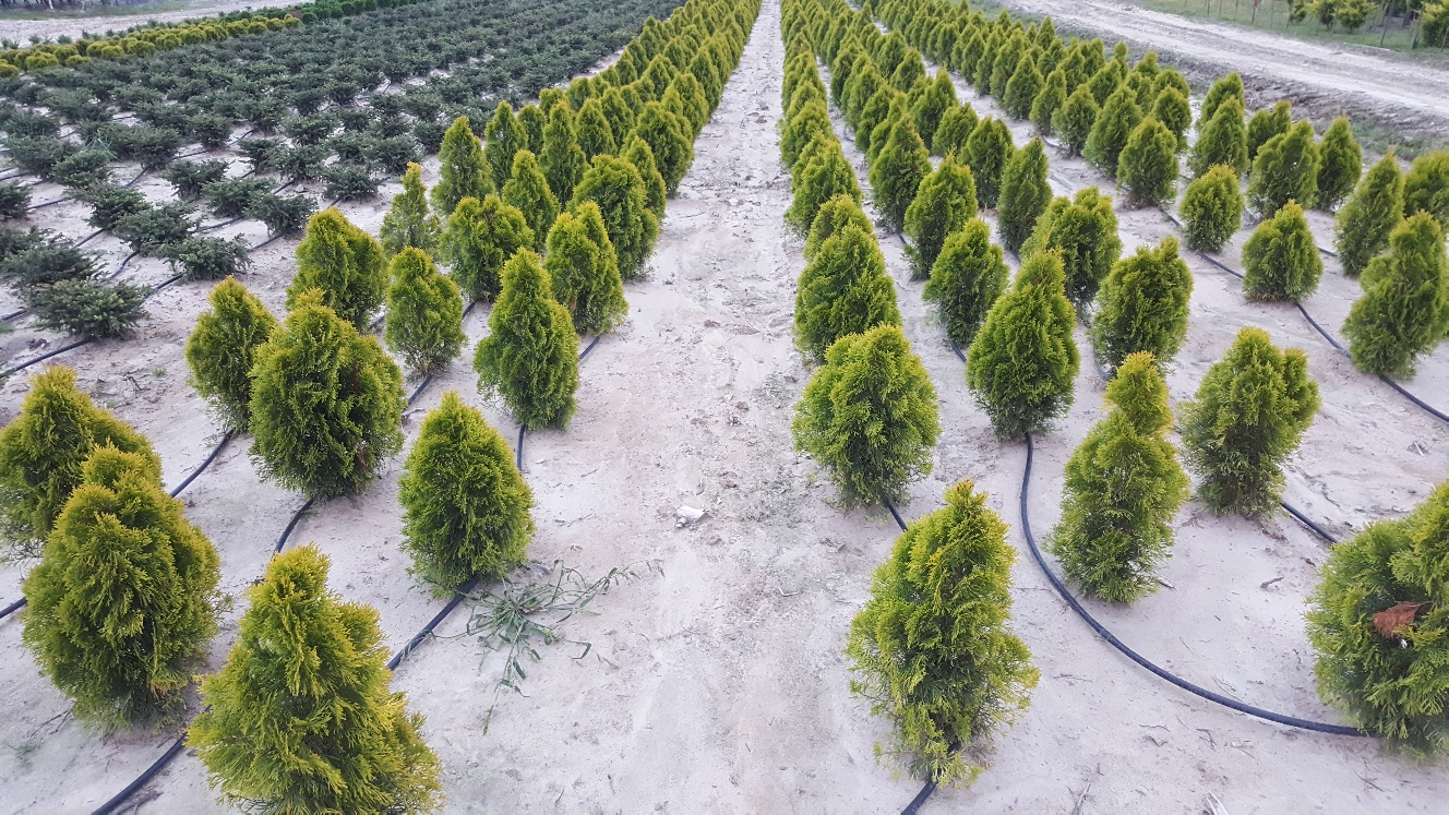 rośliny kopane w gruncie